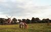 mill and horse at sunset (Jos Mecklenfeld) Tags: minoltax700 minolta x700 minoltamd50mmf20 minoltamd50mm minoltamd md minoltamdlens agfavista200 agfavista agfavistaplus agfa epsonv500 film ishootfilm analog analogue horse mill paard pferd mühle molen landscape landschaft landschap sunset sonnenuntergang zonsondergang terhaar terapel westerwolde groningen netherlands niederlande nederland