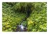 Akaka falls (philippe*) Tags: akaka falls bigisland hawaii nature