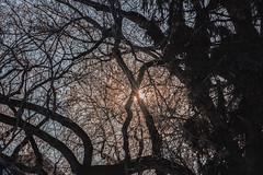 Change the story, change the world (Vanessa wuz here) Tags: landscape 90mm trees 7dwf naturallight tree sky muttartconservatory edmonton yeg sunshine pink blue silhouette