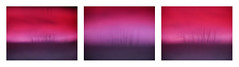 f e e l i n g s . (harmoniouschaos) Tags: tree nature naturethroughglass treelove photography naturephotography lumixphotography love lumix colours pink purple glass unique emotions feelings art artist heart