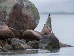 Playa Bahía de los Delfines, Anhatomirim, SC, Brasil