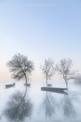 Bleu Loire (Bertrand Thiéfaine) Tags: 2018 d850 arbres bateau champtoceaux crue hiver leculdumoulin leverdujour loire nikkor24120f4 nikon plate ciel bleu reflets fleuve
