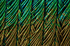 Peacock Feather (pwnell) Tags: barbules peacockfeather peacock microscope photomicrography