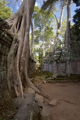 Ta Prohm perspective (daniel_james) Tags: 2018 canon6d canon1635mm cambodia kambodscha temples angkor taprohm ruins forest trees roots destruction southeastasia khmer