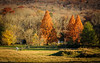 Down in the Valley (*Ranger*) Tags: nikond3300 pasture field woodland forest autumn outdoors arboretum tennessee landscape usa