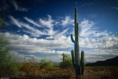 Skyline Regional Park, Buckeye, Arizona (Ken Mickel) Tags: arizona buckeye cacti cactus clouds cloudy desert kenmickelphotography landscape landscapedesert outdoors plants saguaro sky skylineregionalpark topaz topazadjust nature photography unitedstates us