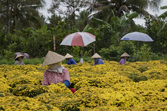 Mekong Delta (Alexis Rangaux) Tags: vietnam people ngc fantasticnature nature travellers travel