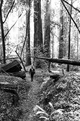 The wanderer (jde95tln) Tags: hendy woods state park california 6d canon redwoods forest