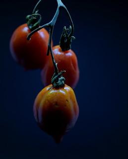 Naples Tomatoes