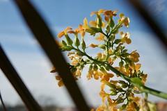 Frühlingssehnsucht (GekonntPlanlos) Tags: lumix gf7