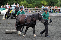 Training Eve (meniscuslens) Tags: horses hounds heroes training rescue pony bickinghamshire princes risborough charity arena crowd