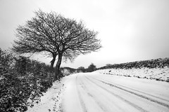 Bissom Road Under Snow (Andrew Hocking Photography) Tags: bissom penryn mylor falmouth cornwall snow 2018 beastfromtheeast stormemma landscape winter gb uk road tracks leadin lonetree tree countryroad mono monochrome blackwhite