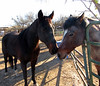 2 horses (Dan_DC) Tags: tucsonarizona americanwest