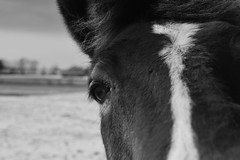 A View to a View (matthew.vortex) Tags: manual 50mm ai 5014 nikkor nikond3300 kentuckyhorsepark kentucky lexington monochrome blackandwhite digital abstract animal nature closeup horse