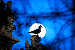 Contra la luna ♪♫ (Fnikos) Tags: bird gaviota gavina seagull port park parc monument architecture night moon sky nightview tree nature outdoor