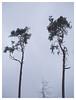 trinity (derkleinebiber) Tags: tree lone trees forest wald woods wood woodland woodlans minimalist intimate moody dull gloom bäume wälder walden naturpark märkische schweiz