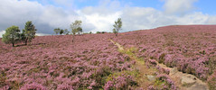 Surprise View panoramic (jpotto) Tags: uk derbyshire hathersage heather moor peakdistrict eastmidlands panoramic scenery landscape