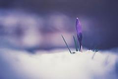 winter arrived a little late (christian mu) Tags: flowers bokeh nature germany winter snow muenster münster christianmu schlossgarten botanicalgarden botanischergarten sony sonya7riii sonya7rm3 9028g 9028 90mm macro