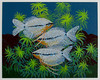 Pearl Gouramis (M.P.N.texan) Tags: art animal fish gourami pearlgourami paint acrylic acrylics original handpainted mpn painting