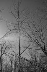 B & W (InnAtElmwood) Tags: bw pentax blackwhite kr winter icestorm