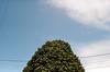2017-12-br-08-praktica-color-ubatuba---000099200020 /⌒⧹ Tree (tataata) Tags: 2017 december winter analog film praktical praktica flektogon35mm28 ubatuba brazil urbanlandscape urbannature trees