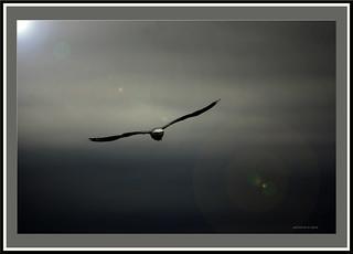 Flight.