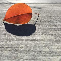 leaf (Kishore Malani Photography) Tags: leaf fall fallseason fallbeauty