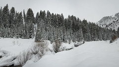 Snow Pano (claeshields) Tags: winter snow trees pines cold bw blackwhite weather utah