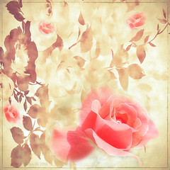 As you walk down the fairway of life you must smell the roses, for you only get to play one round. (Ben Hogan) (boeckli (On Vacation)) Tags: rosa rot roses rose rosen flowers flower flora fleur blume blumen blüten bloom blossom blossoms blooms plants plant pflanzen pflanze textures texturen texture textur photoborder googlenik cep4 mpi ie awardtree