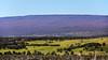 Mauna Loa (wyojones) Tags: hawaii hawaiivolcanoesnationalpark bigisland maunaloa mamalahoahighway statehiway11 volcano faults longmountain hawaiian shieldvolcano snow snowcap