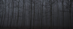 Fear (Jordi Sureda) Tags: forest fear nikon negro naturaleza bosque tranquilo trees arbres boira foggyforest photography fotografia oscuridad dark jordisureda miedo morning moments lonley panoramic solo nikond90 nature árbol