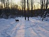 Ben and the Snowy Sunset (~ Liberty Images) Tags: ben benedict collie dog snow winter sunset woods woodland animal pet