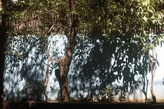 11/11/2017, 11:11 am (N A Y E E M) Tags: tree shadow light colors morning lawn home rabiarahmanlane chittagong bangladesh sooc raw unedited untouched