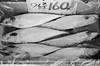 frozen fish at the day market (steve: they can't all be zingers!!! (primus)) Tags: canon canoneoscanon eos elan llsigmasigma 2880mm f35 56 macroagfa apx 400monochromebwblack whiteblack whitefilmagfa film