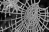 frozen cobweb (Dsmash-Digpix) Tags: beeston greatbritain garden ice frost nottingham nature nottinghamshire web cobweb frozen macro