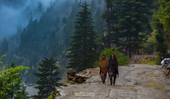A walk in heaven. Neelum Valley, Azad Kashmir. Pakistan (Ali's Photograpy) Tags: neelumvalley pakistan azadkashmir forest jungle rain people greenary landscape naturalbeauty nature mountains photography ali aliasghar alisphotography nikon dslr d750 nikkor 2470mm tourism heaven heavenly