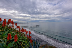 Storm Clouds and Red (markwhitt) Tags: markwhitt markwhittphotography lajolla sandiego california californiacoast ocean pacificocean red aloe aloevera plants bloom nature landscape scenic scenery travel adventure outdoors clouds storm waves dramatic pier nikon wonderful beautiful view