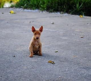 ,, Chubby Puppy ,,
