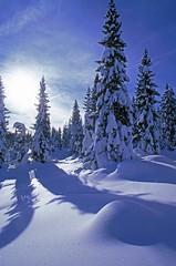 Magico Altopiano (silvano fabris) Tags: photonature natura nature paesaggio landscape snow neve winter inverno