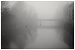 Flying in the fog... (zapperthesnapper) Tags: misty mist fog foggy sonyrx100 sonycybershot sonyimages sony riverkent kendal cumbria river birds birdsinflight blackandwhite mono monochrome monochromatic