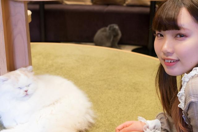 180224 Cat cafe 01