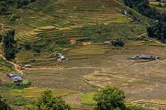 Rýžové terasy v údolí Muong Hua (zcesty) Tags: vietnam26 terasa rýže pole krajina vietnam dosvěta làocai vn