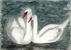 Swans - cisnes (Sonia Aguiar (Mallorca)) Tags: acuarela aquarell soniaaguiar aquarelle aquarel watercolour watercolor swan