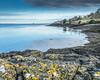 Tay Bay (M McM) Tags: water river rivertay tayport coast coastline rocks lichen mooringring houses hdr clouds fife scotland canoneos760d landscape