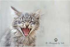 Hello friends ! (Simply Viola ( Busy +off-on )) Tags: gatto gattino felino cat kitten feline pet