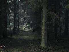 Ladder in the Woods (Netsrak) Tags: europa europe forst natur nebel wald fog forest mist nature woods