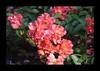 Duke Gardens July 2015 9.03.25 PM (LaPajamas) Tags: nc flora dukegardens gardens