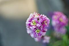 DSC_0053 (Kotaro Nakagawa) Tags: nikon d3300 f 35mmf18g flower