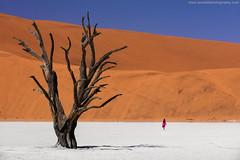 Sossusvlei @ Namib-Naukluft National Park, Namibia (Avisekh) Tags: namibia sand dunes sossusvlei canon 700200 wwwavisekhphotographycom landscape nature