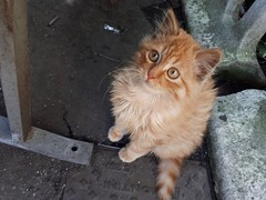 😄 (carlo612001) Tags: cat pet pets cute redcute lovely puppy puppies gatto gattino hganimalsonly
